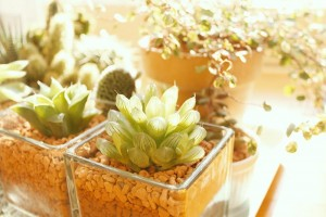 https---www.pakutaso.com-assets_c-2014-05-AXIS93_gardens500-thumb-1000xauto-4544