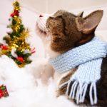 【クリスマスプレゼント】大学生彼女が欲しいモノランキングベスト5